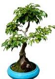 矮小的结构树 库存照片