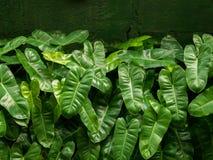 矮小的花束装饰植物 库存图片