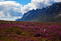 矮小的野草在Auyuittuq 库存图片