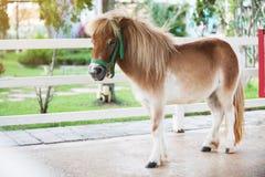 矮小的马在农场 图库摄影