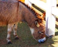 矮小的马是逗人喜爱的在动物园 图库摄影
