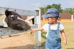 矮小的马的亚洲逗人喜爱的女婴哺养的红萝卜 免版税库存照片