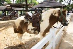 矮小的马身分在槽枥放松在动物农场在Saraburi,泰国 免版税库存图片