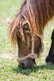 矮小的马 免版税库存照片