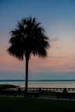 矮棕榈条树的剪影 图库摄影