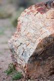 石化树干 库存照片