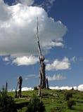 石化树桩结构树 库存图片