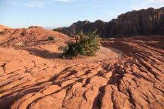 石化沙丘的红色岩石与坚定的灌木的 库存图片