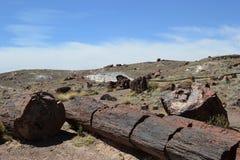 石化石树在亚利桑那沙漠 免版税库存图片