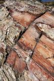 石化纹理木头 免版税库存照片