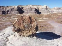 石化结构树 库存图片