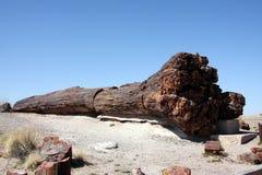 石化结构树 免版税库存照片