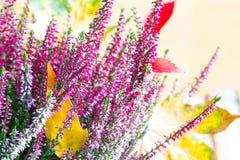 石南花和秋叶摘要花卉静物画 免版税库存照片