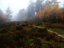 石南花的领域在五颜六色的秋天风景的 免版税图库摄影