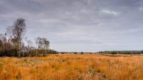石南花领域在秋天 免版税库存图片