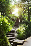 石台阶在公园 免版税库存照片