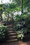 石台阶在植物园里 棕榈树和另一个热带植物 库存照片