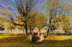 石台阶在秋天的公园 库存照片