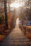 石台阶在秋季森林和前太阳光芒里 免版税库存图片