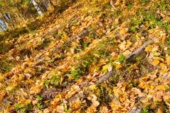 石台阶被盖的下落的叶子 免版税库存图片