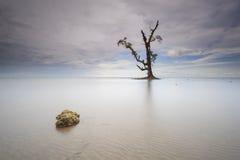 石和唯一树在海 免版税库存照片