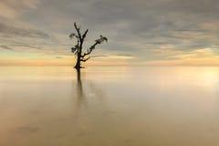 石和唯一树在海 库存图片