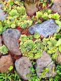 石头和绿色唤醒 免版税库存图片