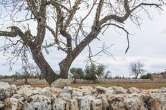 石块墙和树风景 免版税库存图片