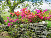 石块墙在Ambleside在英国湖区 免版税库存照片
