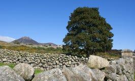 石块墙特点那些在唐郡Mourne山发现了在北爱尔兰 免版税库存图片