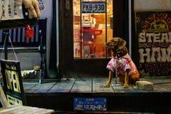 石垣,日本- 11月25 :Dressed在酒吧前面在晚上坐2015年11月25日在石垣,日本 免版税库存照片
