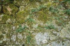 石墙与绿色青苔的背景纹理 图库摄影