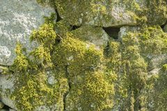 石墙与绿色青苔的背景纹理 库存图片