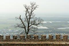 石墙和树 免版税图库摄影