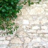 石墙和植物有绿色叶子的 免版税库存图片