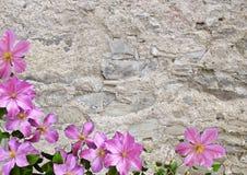 石墙壁和花 免版税库存图片