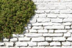 石墙白色 库存照片