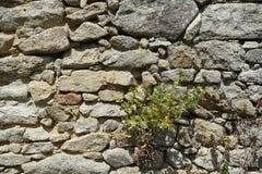 石墙石头背景的不同的类型和大小 图库摄影