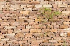 石墙,植物 免版税库存图片