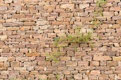 石墙,植物 库存图片