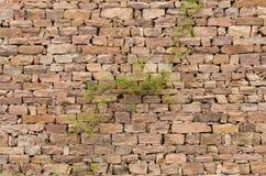 石墙,植物 免版税库存照片