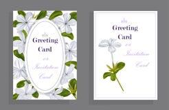 石墨在卡片的auriculata花 免版税库存图片