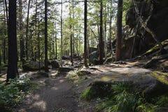 石头、小山和植物看法在森林里 免版税库存图片