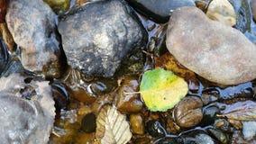 石头和叶子特写镜头视图在小河在Mt米歇尔国家公园在马里NC附近 免版税库存照片