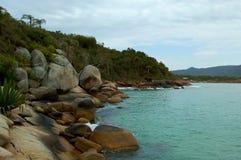 石头和植被由海滩 免版税库存照片