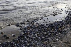 石头和贝壳在海滨 库存图片