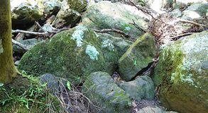 石头在森林里 库存图片