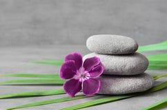 石头平衡和植物 禅宗和温泉概念 免版税库存照片