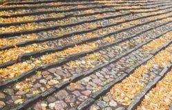 石头楼梯与许多秋叶的 库存图片
