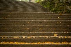 石头楼梯与许多秋叶的 库存照片